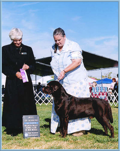 Ch Aristes' Tomahawk Best of Winners Chocolate Lab