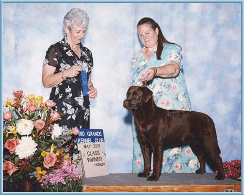 Kachina at 9 months old as Class Winner