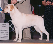 Desi - Ch Aristes' Desert Sky - Yellow Labrador Retriever