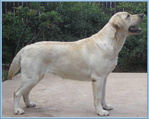 Aristes' Sparkling Soda , Yellow Labrador Retriever, Albuquerque, New Mexico