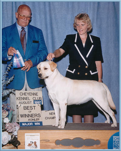 Yellow Labrador Retriever, Rose, Best of Winners